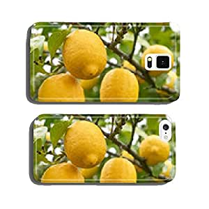 Ripe lemons - limes - fruit - lemon trees - Algarve cell phone cover case Samsung S5