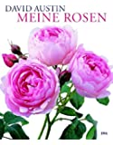 Meine Rosen