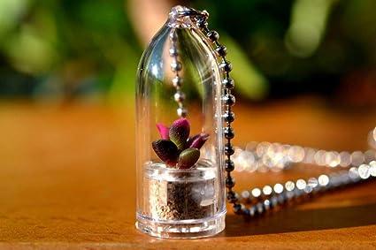 Amazon.com: Sunrise Live Succulent Plant Colgante Collar ...
