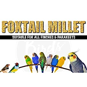 The Birds Company Foxtail Millet (Kangni), with Spirulina & Cuttlefish Bone, Bird Food for Canary, Finches, Budgies, Lovebirds, Cockatiels, 450 g