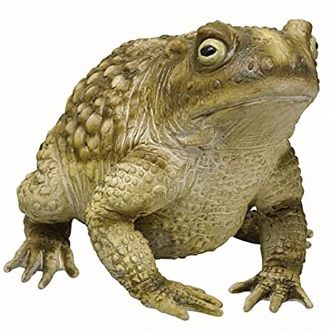 Amazon.com: Foam Toad Statue - ST: Toys & Games