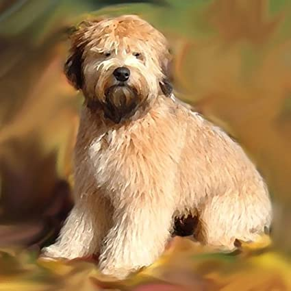 Amazon.com: Perros Soft Coated Wheaten Terrier – Soft Coated ...