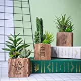Set of 3 Artificial Succulents with Led Lights in