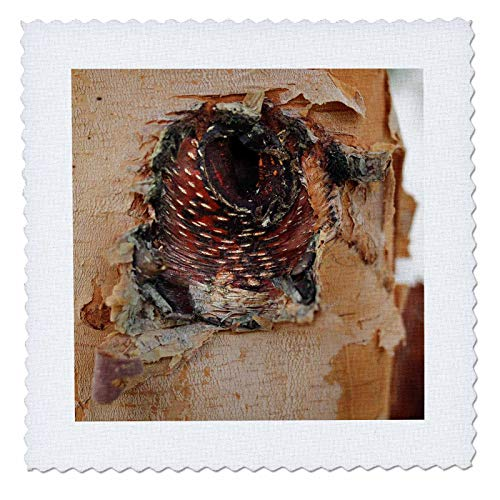 (3dRose Stamp City - Nature - Close up Photo of The bark of a River Birch Resembling an Angry Bird. - 18x18 inch Quilt Square (qs_301356_7))