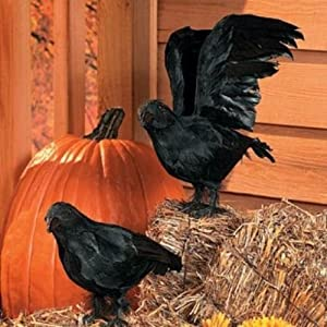 Realistic Feathered Crows -Set of 2 - Great Halloween Prop!