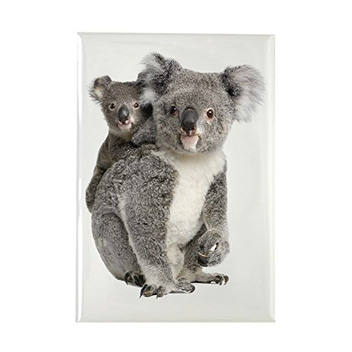 Animals Rectangle Magnet - Rectangle Magnet Koala Bear Mother and Baby