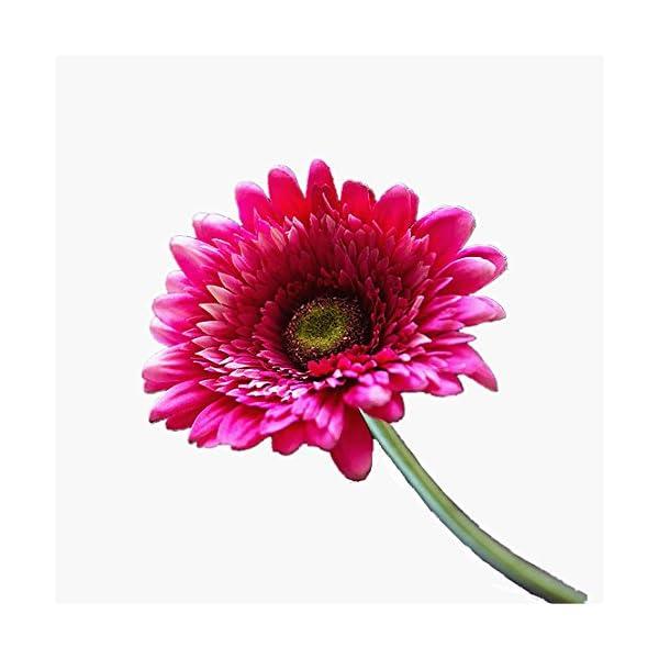Mynse 10 Pieces 22″ Hight Artificial Flowers Single Barberton Daisy Gerbera Jamesonii African Daisy Rose