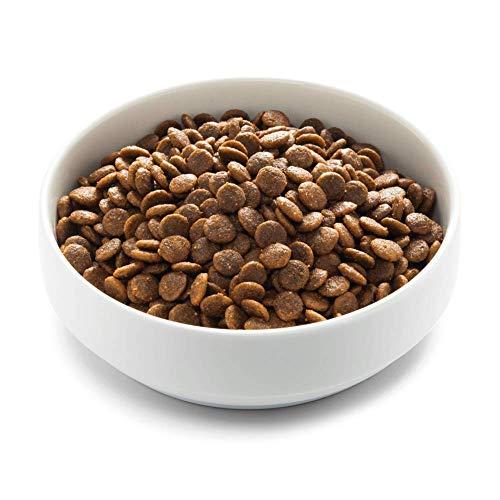 Edgard & Cooper | Pollo de Granja con Mango, arándanos Negros, Manzana y Zanahoria Frescos | Comida Seca para Perros Adultos | Sin Cereales | ...