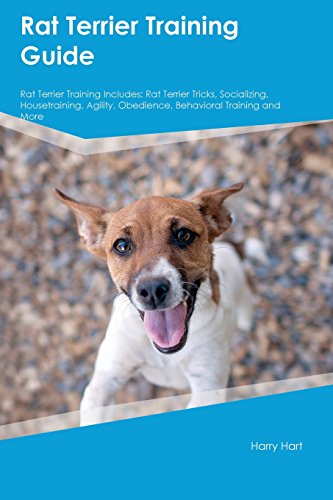 Rat Terrier Training Guide Rat Terrier Training Includes: Rat Terrier Tricks, Socializing, Housetraining, Agility, Obedience, Behavioral Training and More