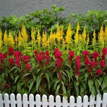 Buy Ur Gardening Seeds products online in Oman - Muscat