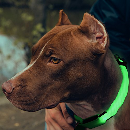 Bseen LED Safety Pet Collar - Eco-Friendly Nylon Webbing Light Up Dog Collar, Safety Lights to Keep Dog Visibility and Safety (Green, Medium)