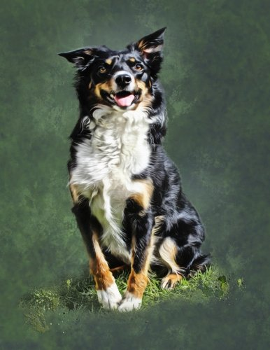 Border Collie Portrait (Border Collie Notebook: 8.5 X 11 202 College Ruled Pages)