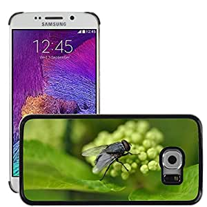 Hot Style Cell Phone PC Hard Case Cover // M00110384 Moscow Fly Flies Insects Bug Insect // Samsung Galaxy S6 EDGE (Not Fits S6)