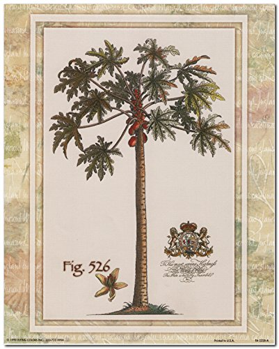 Tropical Palm Tree Vintage Fig 526 Contemporary Wall Decor Art Print Poster