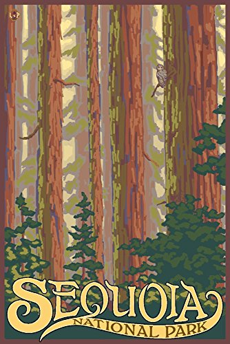 Sequoia National Park, California - Forest View (16x24 Giclee Gallery Print, Wall Decor Travel Poster)