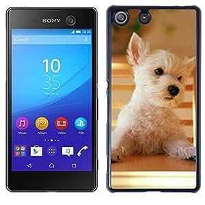 Print Motif Coque de protection Case Cover // V00000825 Patrón del perro de perrito // Sony Xperia M5 E5603 E5606 E5653