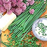 Hinterland Trading Common Chives 250+ Seeds