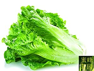 Lettuce Seeds Four Seasons Planting Leaves With Lettuce Seed Roasted Vegetables About 100 seeds