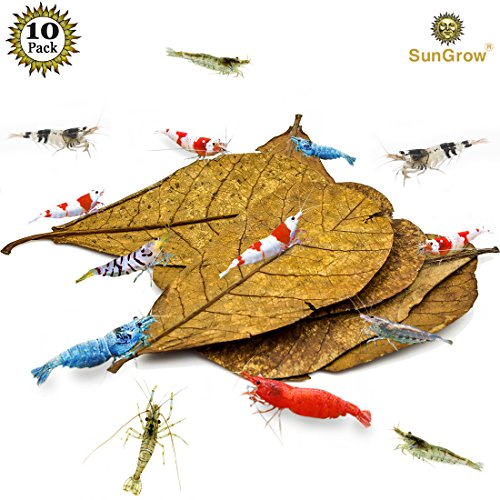 """Indian Almond - MARIMO PET STORE 10 Natural Shrimp Leaves by SunGrow (Giant Size 7""""- 9""""): Organic, Beautiful, Sun Baked Catappa Leaf that Provide Shelter, Food and Beneficial Tannins: Perfect for Breeding & Hiding"""