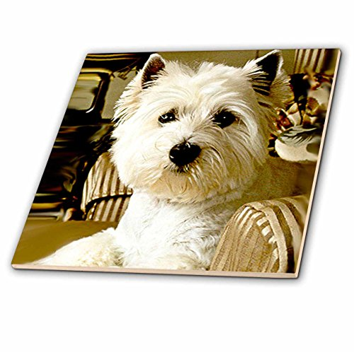 (3dRose Dogs West Highland Terrier - Westie - 4 Inch Ceramic Tile (ct_609_1))