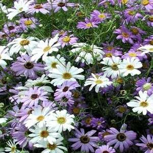 Flower Mound Eye Care - 7
