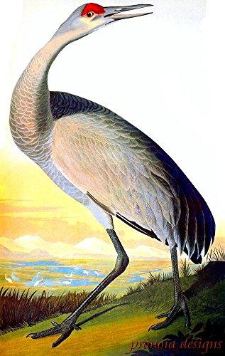 Audubon Bird Series (Counted Cross Stitch Pattern: