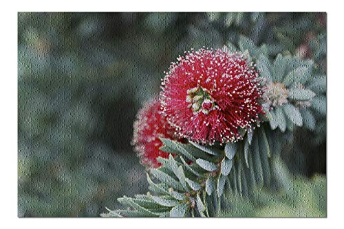 - Red Dwarf Bottle Brush Flower - Photography A-94594 (20x30 Premium 1000 Piece Jigsaw Puzzle, Made in USA!)
