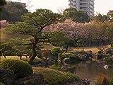 Flowering cherry trees (Japan)