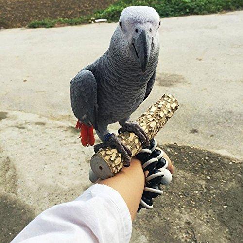 Parrot Wood - 9