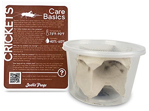 51yzne9na L - Josh's Frogs 1/4 Banded Crickets (120 Count)