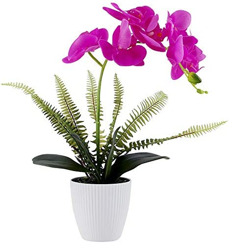 The Purple Fake Orchid Plant in Pot