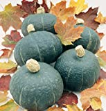 HEIRLOOM NON GMO Black Forest Kabocha Squash 15 seeds