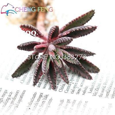 100 semillas Kalanchoe Plantas en maceta Plantones de plena flor en maceta semillas longevidad plántulas de semilla de Año Nuevo Lunar Jardín Decoración SVI