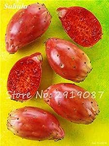 200 PC Raras Nopal-comestibles Semillas Frutas del jardín de flor de Bonsai, Opuntia leptocarpa, raras, dulces, nutritivas Helthy Herb 5