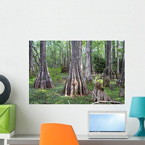 Wallmonkeys WM360760 Big Cypress National Preserve Florida USA Peel and Stick Wall Decals (24 in W x 16 in H), Medium