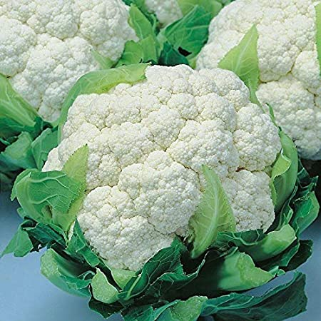 Cauliflower White Express Vegetable Seeds