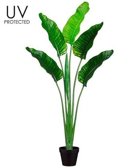Amazon Com One 5 Foot Outdoor Artificial Bird Of Paradise Palm