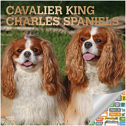 - Cavalier King Charles Spaniels Calendar 2019 Set - Deluxe 2019 Cavalier King Charles Spaniels Wall Calendar with Over 100 Calendar Stickers (Cavalier King Charles Spaniels Gifts, Office Supplies)