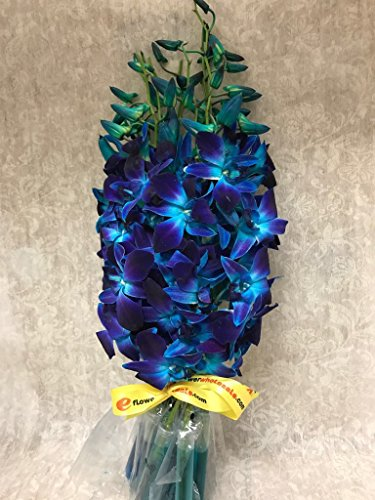 Premium Cut Blue Orchids (10 Stems - Deliver Flowers