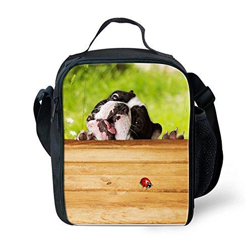 Boston Terrier Breed Standard - 8
