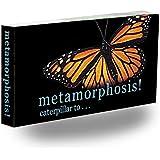 Butterfly Metamorphosis Flipbook