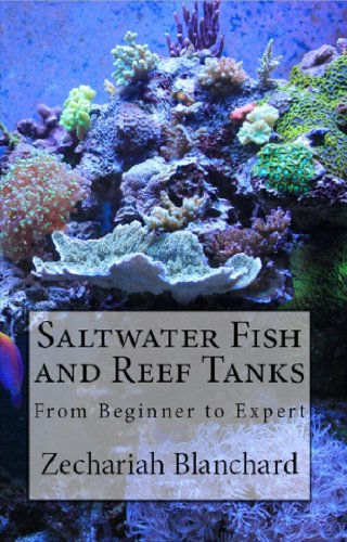 Saltwater Fish and Reef Tanks: From Beginner to Expert - Nano Reef Fish
