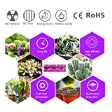 LED Grow Light for Indoor Plants,Sun-Like Full