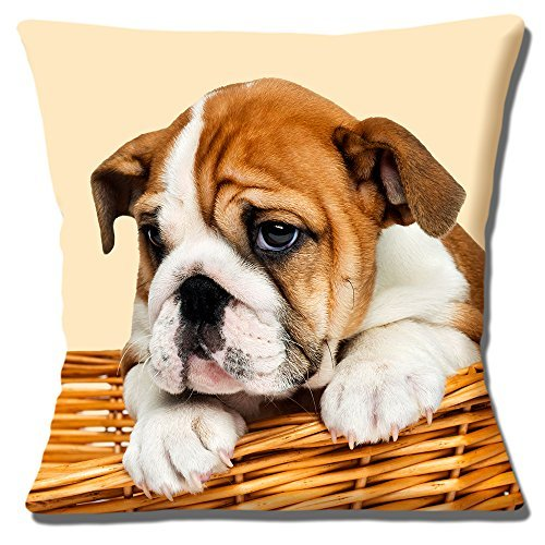 Lindo Bulldog Inglés Cachorro Funda De Cojín 16 pulgadas ...