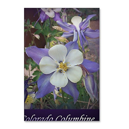 CafePress - Columbines Mp - Postcards (Package of 8), 6