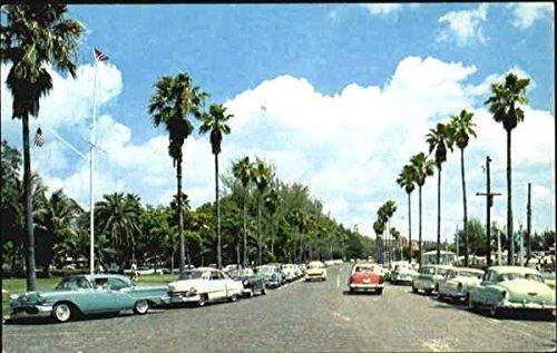 Palm-Lined Bayshore Drive St. Petersburg, Florida Original Vintage - Sun Bayshore