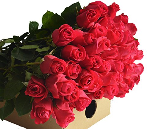 Pink Bouquet Hot Rose (Blooms2Door 50 Hot Pink Roses (Farm-Fresh, Long Stem - 50cm) - Farm Direct Wholesale Fresh Flowers)