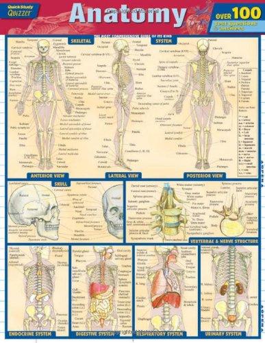Anatomy Quizzer (Quick Study Quizzer)