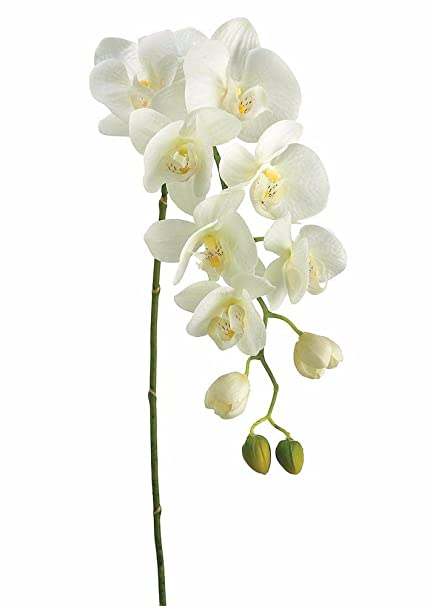 37789dbaef Image Unavailable. Image not available for. Color: Allstate Real Touch  Phalaenopsis Orchids in Cream ...