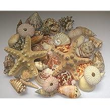 MaxJam Assorted Mixed Seashells Set Of 50 Including Starfish Urchins Scallops